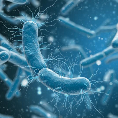 bacteriaelectricity